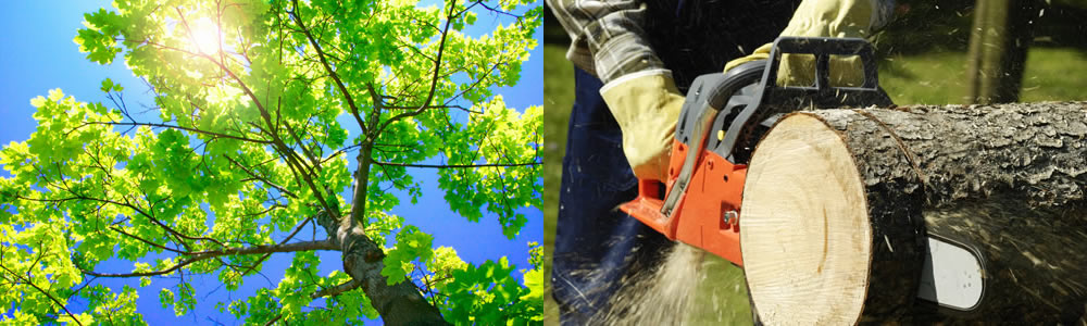 Tree Services Bethel